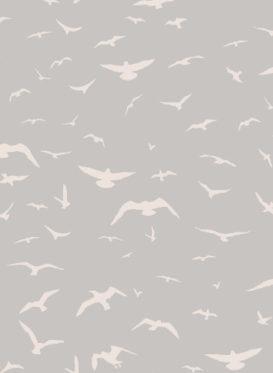 Seagulls Powder