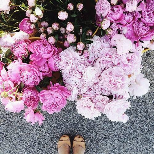 Picking the perfect flowers