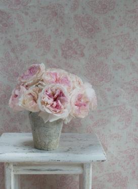 xanthe soft pinks